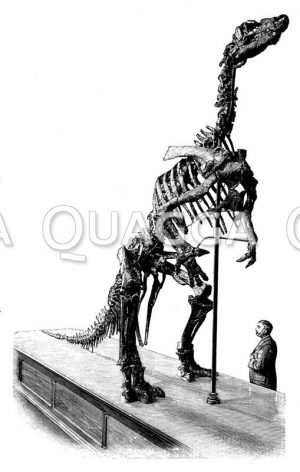 Iguanodon: Präparat mit Museumsbesucher