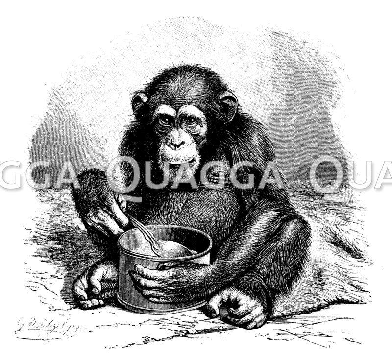 Schimpanse isst mit einem Löffel aus einem Blechnapf