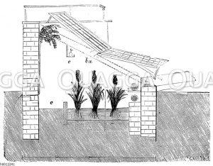 Ananasbeet im Treibhaus