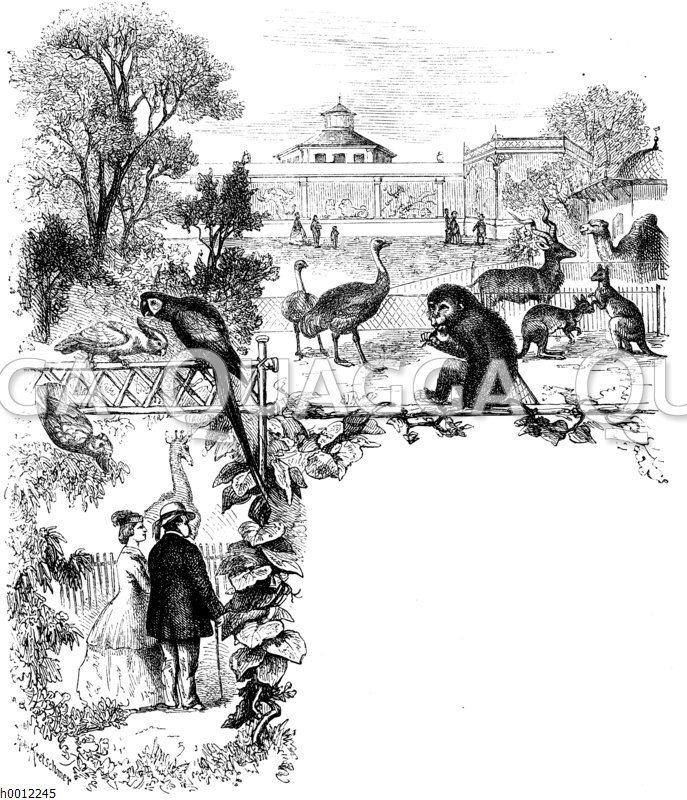 Kapitelanfangsvignette: Zoo