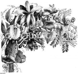 Kapitelanfangsvignette: Orchideen