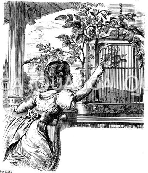 Mädchen füttert weiße Taube in Käfig