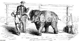 Junger Elefant im Zoo