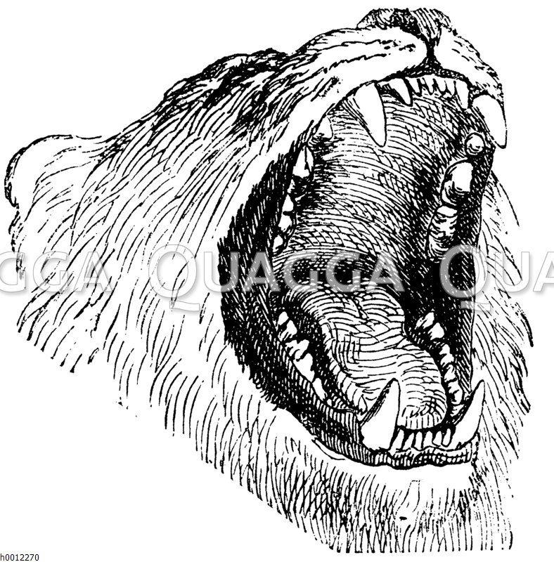 Löwenkopf mit geöffnetem Maul