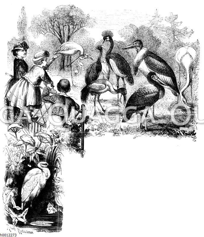 Kapitelanfangsvignette: Vogelanlage im Zoo
