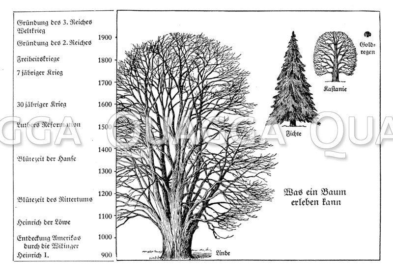Höchstalter einiger Bäume