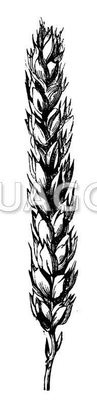 Alle News zum Thema Weizenpreis historisch im Überblick: Hier finden Sie alle Meldungen und Informationen rund um das Thema Weizenpreis historisch.