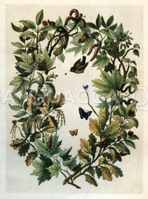 Blüten und Fruchtzweige deutscher Laubbäume