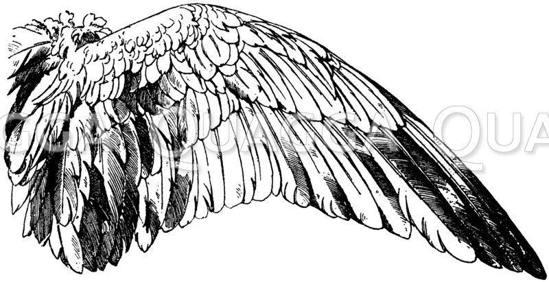Flügel einer Wildgans