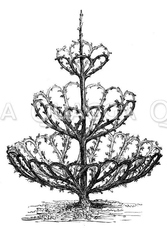 Kunstvoll geformter Birnenbaum