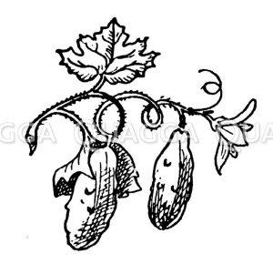 Vignette: Gurkenpflanze mit Blüte