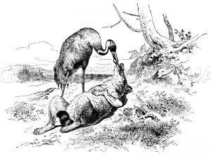 Fuchs lässt sich von Storch füttern