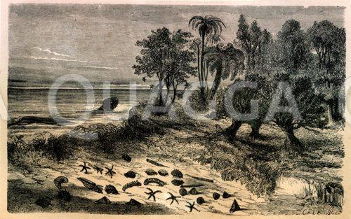 Landschaft der Kreidezeit