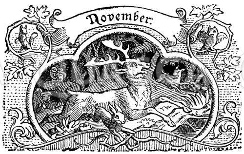 Vignette: November