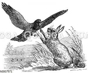 Häsin schützt ihre Jungen vor einem Raubvogel
