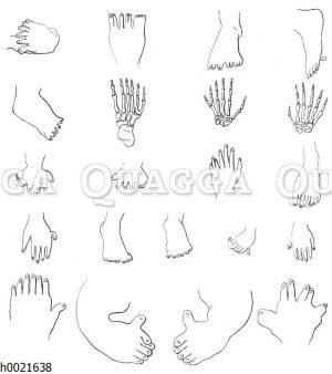 Vermehrungen der Finger und Zehen