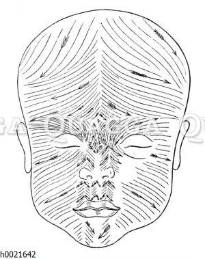 Richtung der Wollhaare im Gesicht des Neugeborenen
