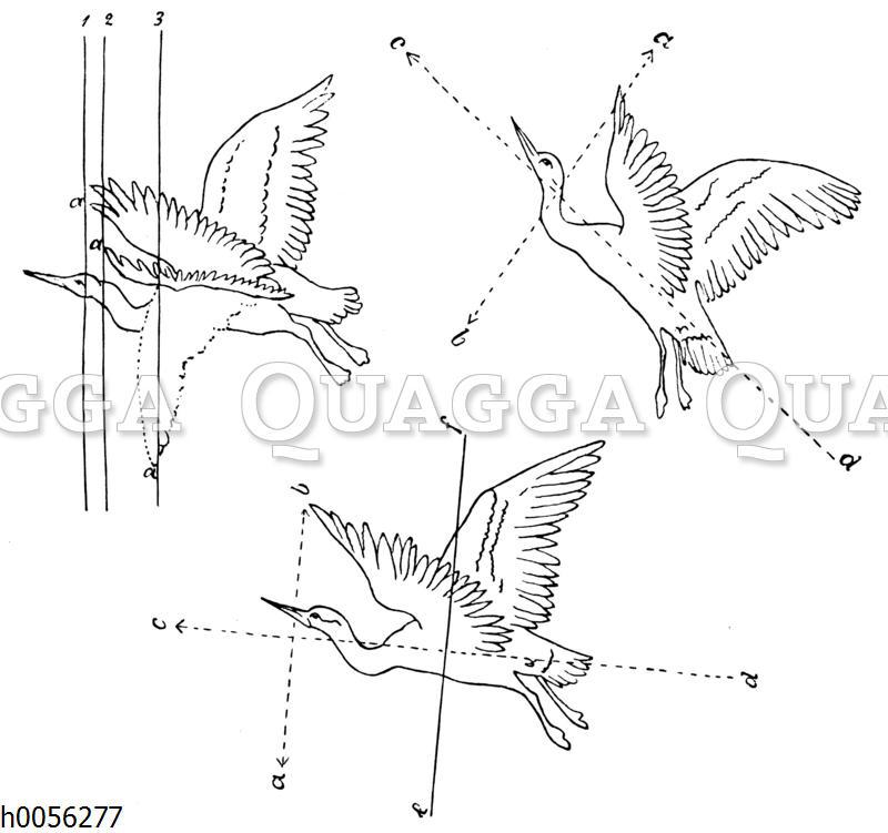 Skizzen Leonardo da Vincis zum Vogelflug