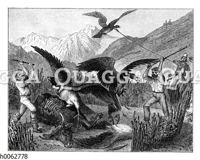 Erlegung der Kondore in Chile