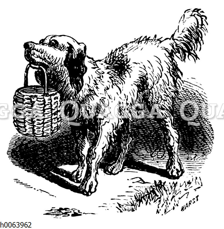 Hund apportiert Korb