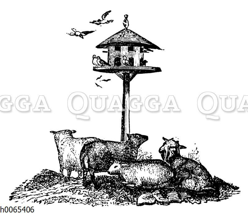 Taubenschlag und Schafe
