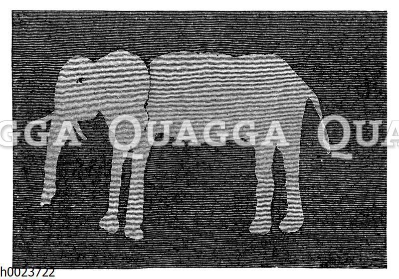 Elefant. Zeichnung eines Buschmanns