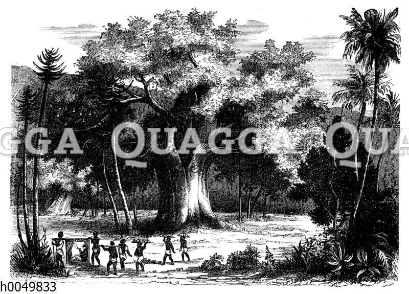 Haltplatz unter einem Baobab