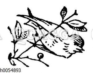 Vignette: Vogel