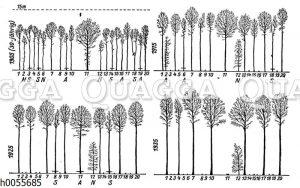 Auslichten eines Waldbestandes