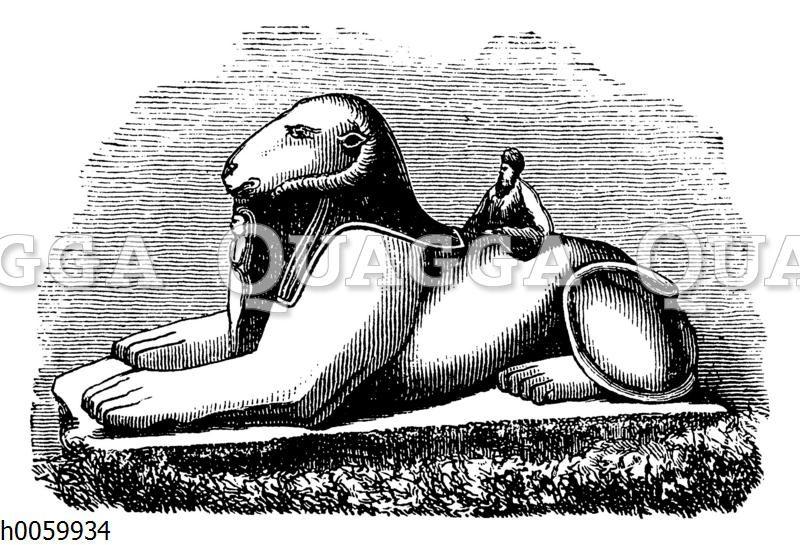 Widdersphinx