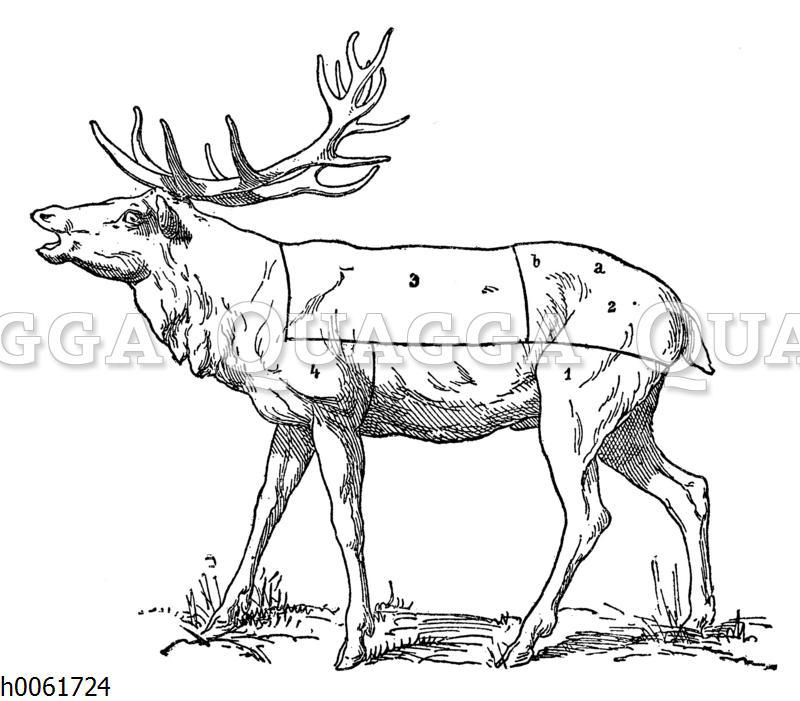 Fleischeinteilung Hirsch