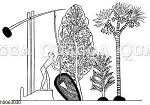 Bewässerung mit dem Schaduf
