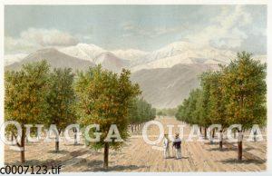Orangenplantage in Südkalifornien