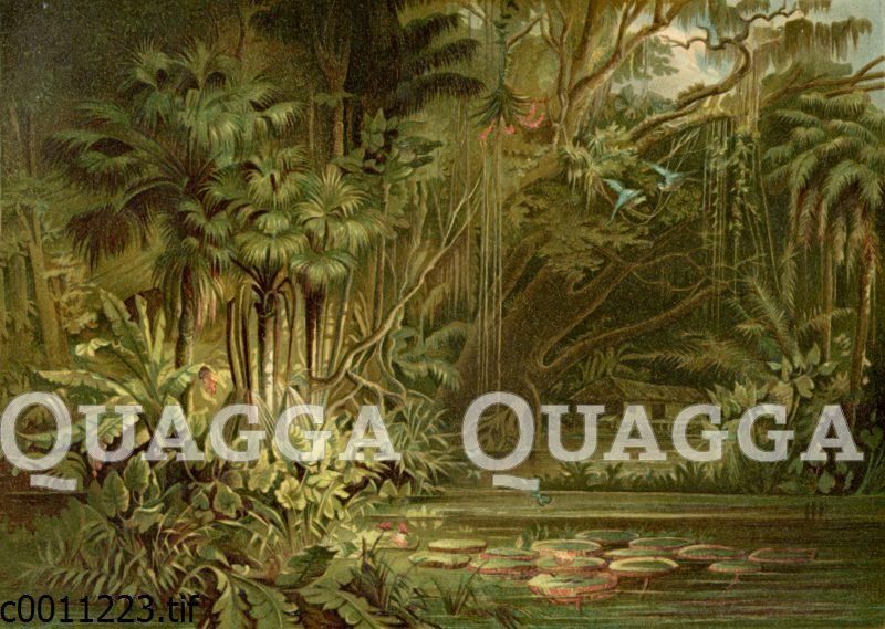 Dschungel am Amazonas