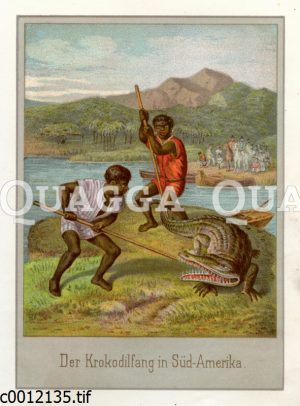 Krokodiljagd in Südamerika