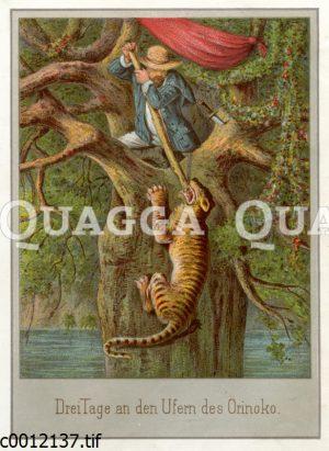 Mann verteidigt sich gegen einen angreifenden Tiger
