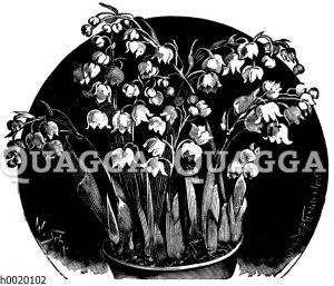 Töpfchen mit blühenden Maiblumen