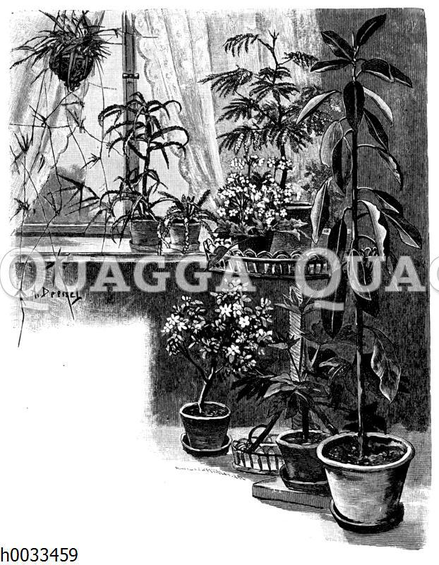 Zimmerpflanzen am Fenster