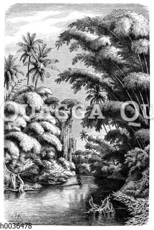 Bambuswald auf Ceylon