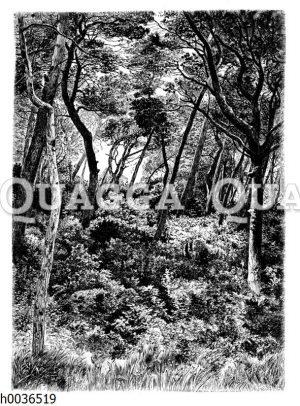 Geschichteter Wald