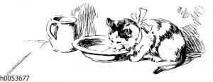 Katze mit Schleife trinkt MIlch