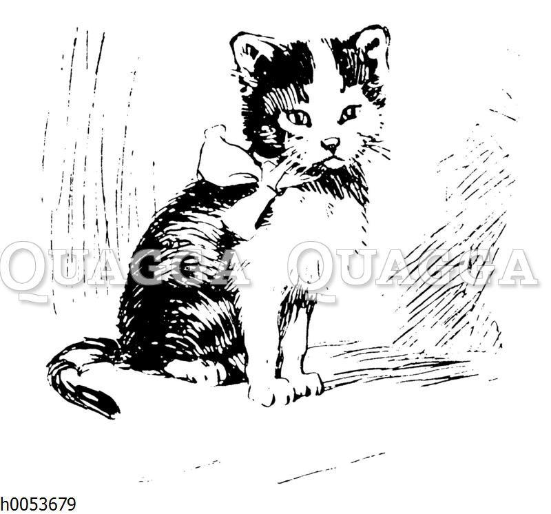 Kätzchen mit Schleife