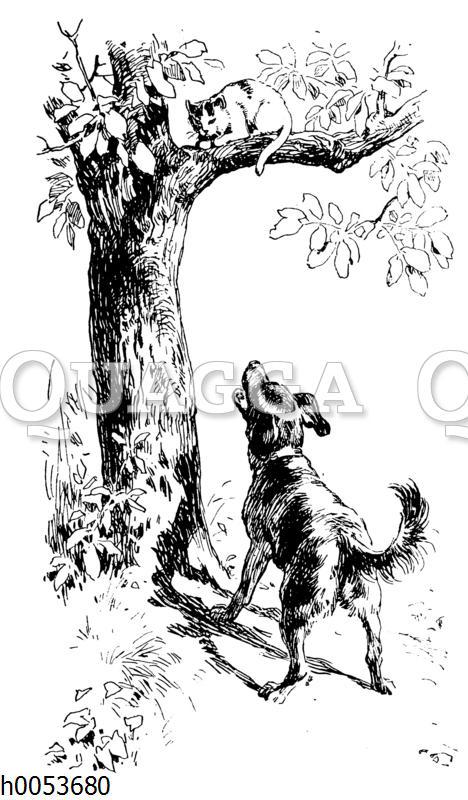 Katze auf einem Baum wird von Hund angebellt