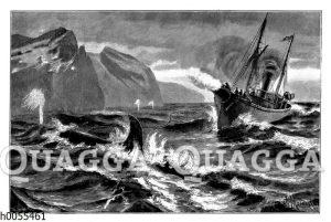 Walfang an der Küste Sibiriens