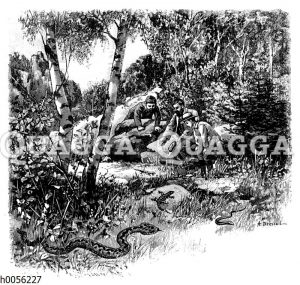 Drei Männer beobachten Eidechse und Kreuzotter im Wald