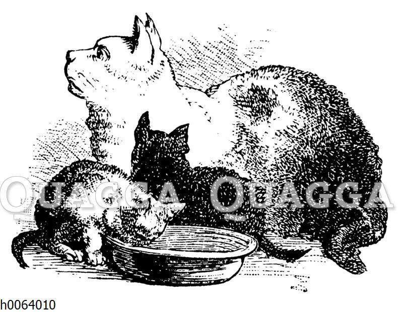 Katzenmutter und Katzenjunge am Fressnapf