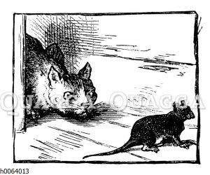 Katze lauert einer Maus auf