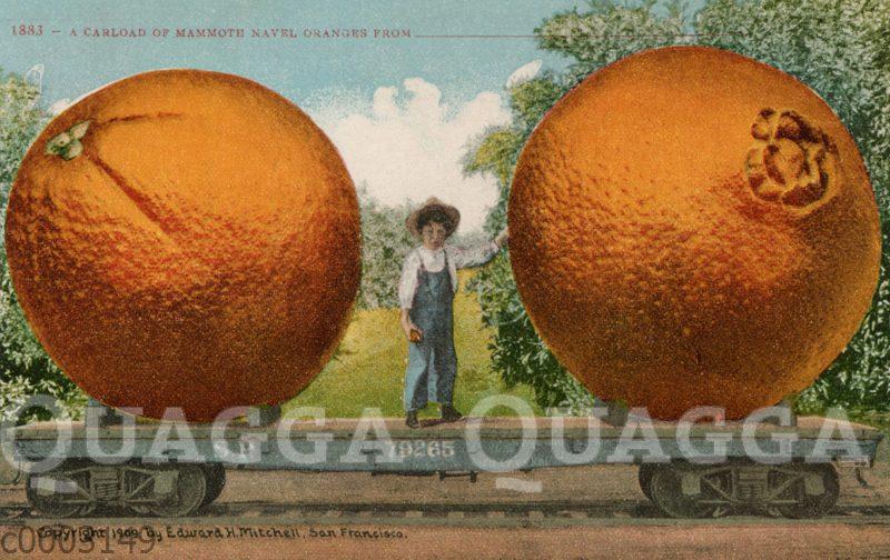 Junge und zwei überdimensionale Orangen auf einem Zugwagen
