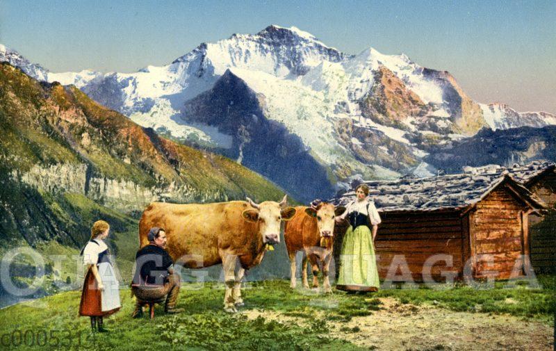 Kühe und Bauern vor Schweizer Bergpanorama