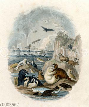 Tiere des Nordmeers